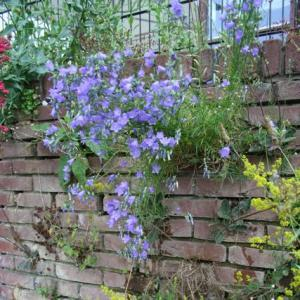 FOUR WAYS TO REDUCE THE LOSS OF NATIVE PLANTS AND ANIMALS FROM OUR CITIES AND TOWNS