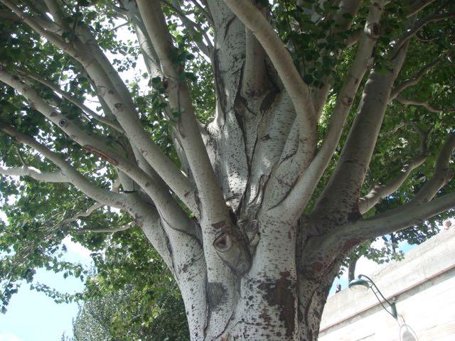 Weg mit dem Baum!