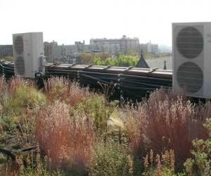 LIVING ROOFS – A catalyst for building communities