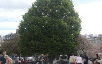 THE OVERLOOKED PROPERTIES OF TREES IN URBAN AREAS