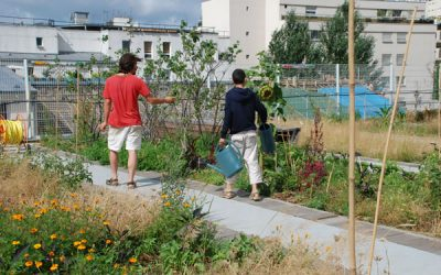 A COMMUNITY GARDEN…. ON THE ROOFTOP OF A SCHOOL