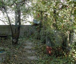 [:en]Dach- und Fassadenbegrünung – neue Lebensräume