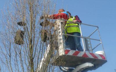 Insektenvielfalt auf Stadtbäumen  –  sind Stadtklimabäume geeignete Habitate?