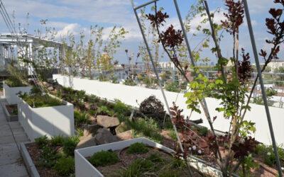 Biotope City: Bauanleitung für eine klimaresiliente, grüne und naturinklusive Stadt