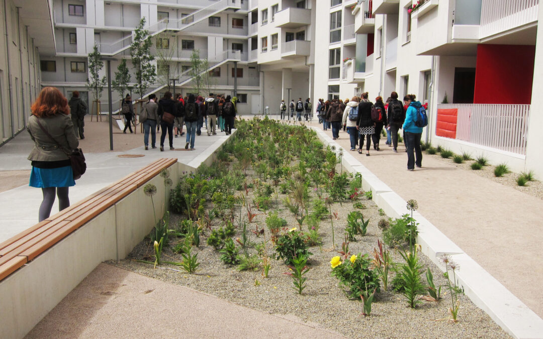 Regenwassermanagement trifft auf Bauwerksbegrünung am Beispiel Wiens